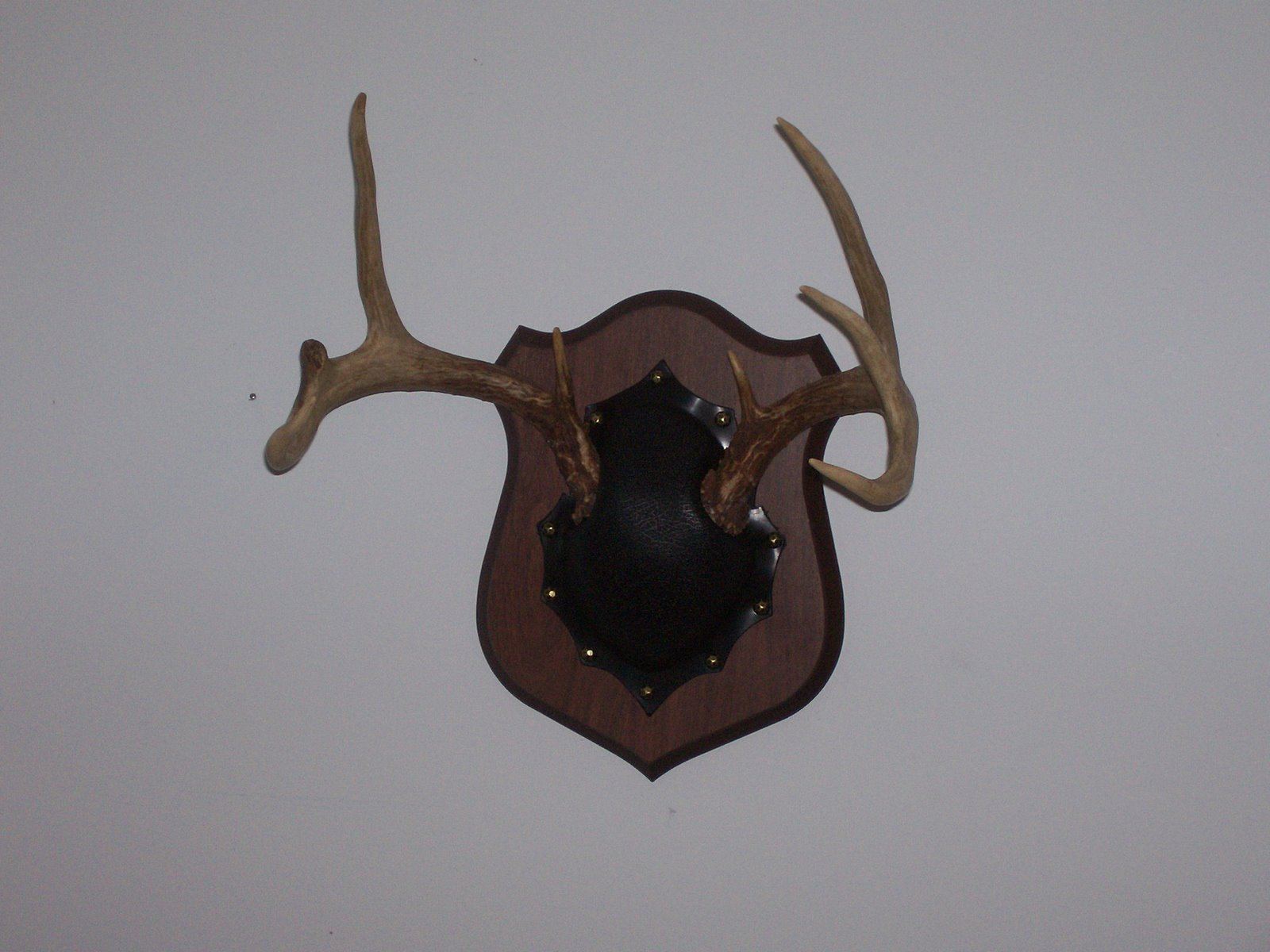 An emergent agrarian mounting deer antlers